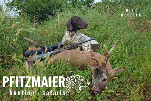 Osgyan Rumänien Rehbock - Pfitzmaier Jagdreisen