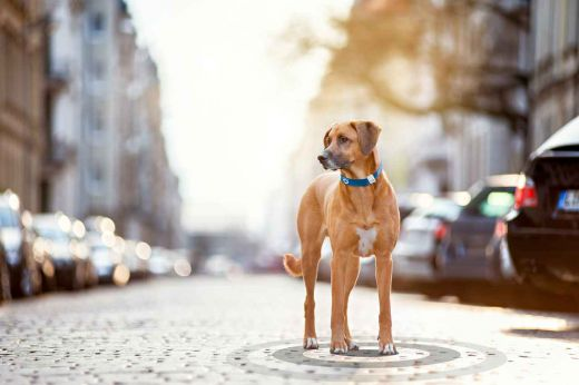 TRACTIVE GPS Pet Tracking Device Hundetracker GPS Ortungsgerät